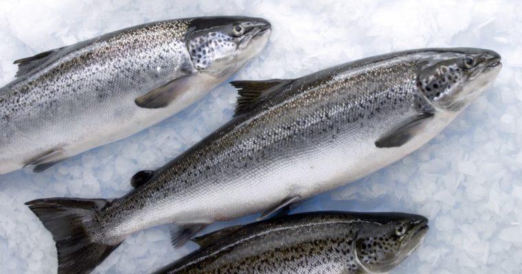 Чим корисні страви з риби сьомги